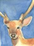 Deer 5_7_11
