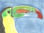 Toucan (5-28-11)